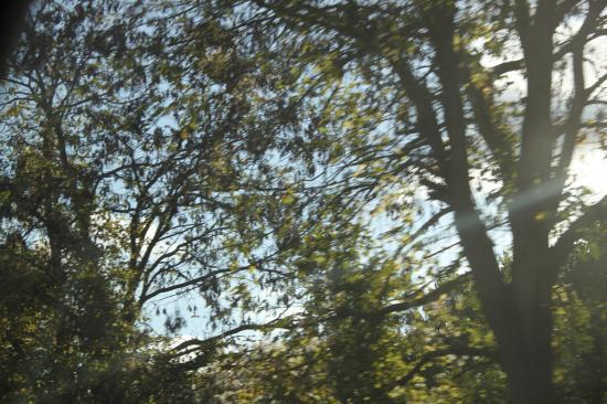 La lumière, les branchages et ce léger flou, eh oui on continue notre route